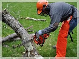 Tree Fellers Johannesburg